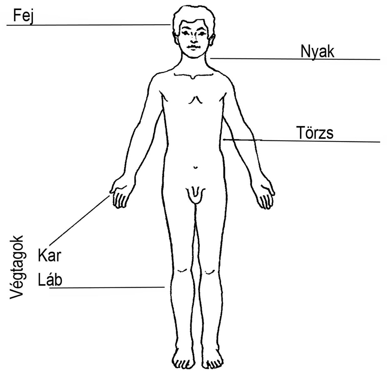 a test fő méregtelenítő szerve gélek genitális szemölcsök kezelésére