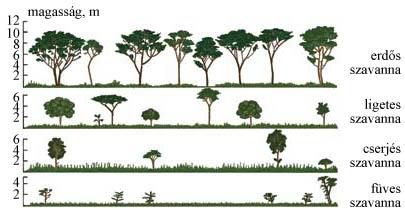 A szavannák növénytakarójának változása