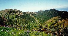 Őserdő Észak-Amerikában