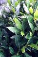 Szubtrópusi növényzet