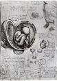 A magzat az anyaméhben, Leonardo rajza