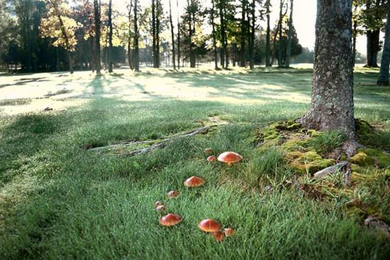 Az erdei gombák élőhelye