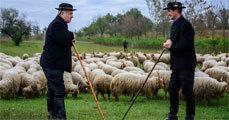 Harcosokért, pásztorokért