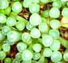 Ablakos növények