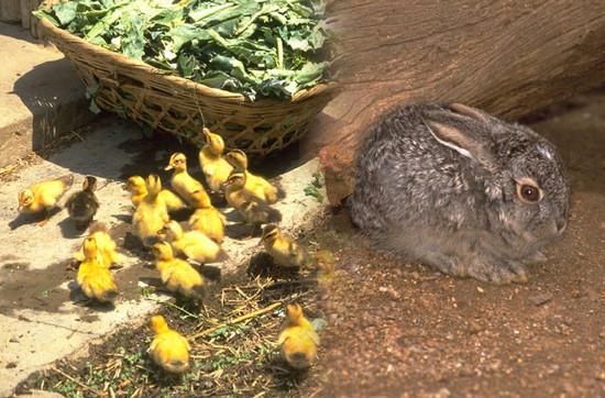 Húsvéti állatok