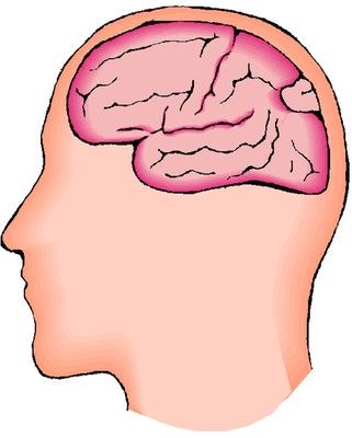 Az agy
