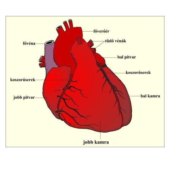 Felső fő visszér elzáródása a szívben