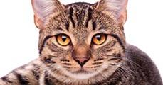 A macskák sokezer éves történelme