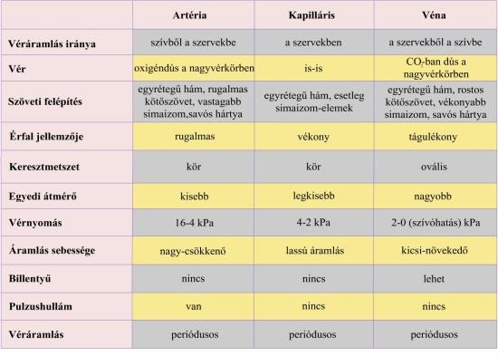 Vérerek típusai és jellemzőik