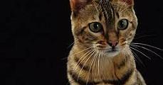 Költők és írók szenvedélye: a macska