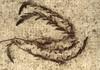 Kardhínár