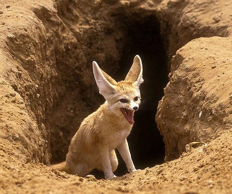 Sivatagok élővilága