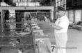 Az úszóválogatott edzése