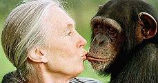 Jane Goodall, a majmok védője