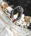 Mészégetés a Bükkben napjainkban: a kemence szélét kövekkel rakják ki