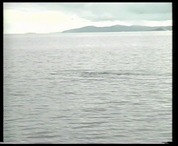 Bálna az óceánban