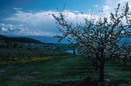 Tavaszi táj