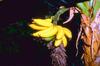 A banánfürt