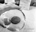 Numizmatikai gyűjtemény
