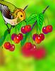 A cseresznyét lakmározó madár