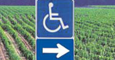 A fogyatékosok képzése