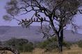 Ligetes szavanna képe (Afrika)