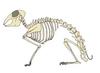 Emlősállat csontvázának részei