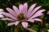 Rovar a virágon