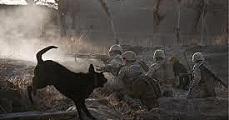 Állati harcosok
