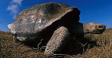 Teknősök szigete - a Galapagos