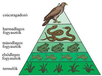 Az ökológiai piramis