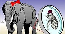 Mi történik, ha elefánt méretű lesz a bolha?