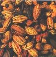 Frissen szüretelt kakaóbabok; a korai termelők fontos csereeszköze