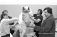 Kínai agyagkatonák érkezése a Nemzeti Múzeumba