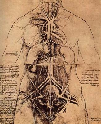 Leonardo da Vinci: A belső szervek, anatómiai rajz