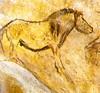 Ló képe