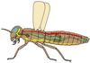 Belső szervek elhelyezkedése a rovarok testében