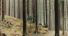 Lengyelország legöregebb parkja