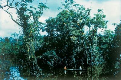 A trópusok élővilága