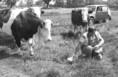 A csernobili katasztrófa utáni sugárszintmérés a legelőn