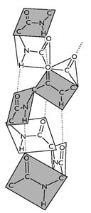 Az α-hélix