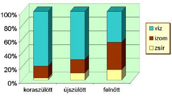A szervezet víztartalma az életkor függvényében