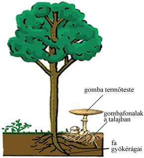 A gombák és a fák együttélése