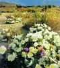 Virágzó sivatag