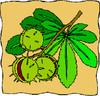 Vadgesztenye termése
