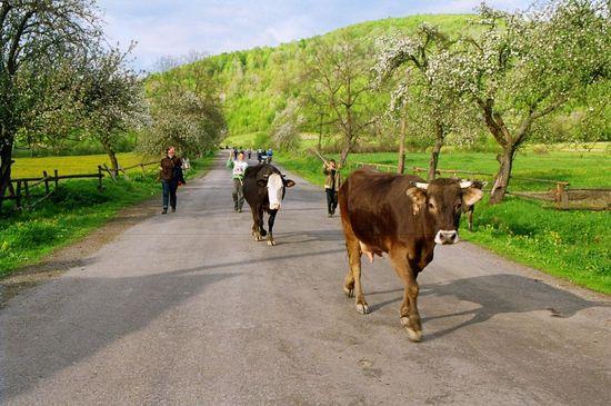 Magyarország mezőgazdasága