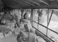 Félezer éves Janus Pannonius évfordulóra készülnek Pécsett