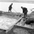 Időszerű mezőgazdasági munkák Szolnok megyében