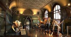Ismét a Bécsi Természettudományi Múzeumban