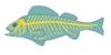 A halak idegrendszerének vázlata